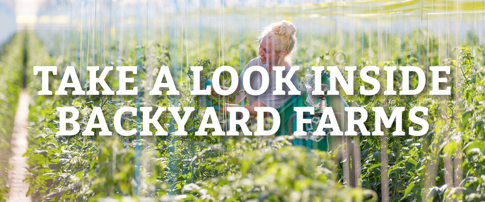Take a look inside Backyard Farms